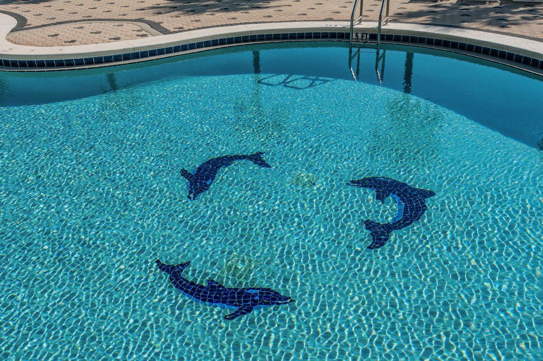 Emerald Dolphin 20121121 060